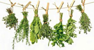 Herbs for use